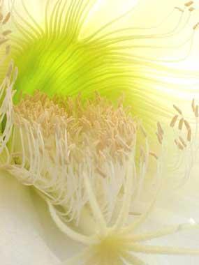 SpencerBurke_Flower1.jpg