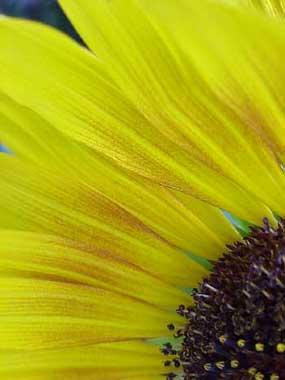 SpencerBurke_Flower4.jpg
